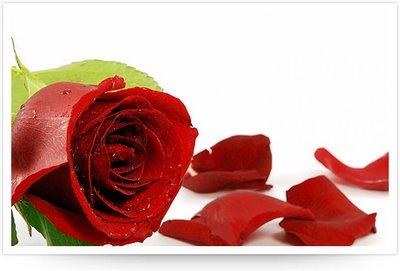 Thorn-less-Rose